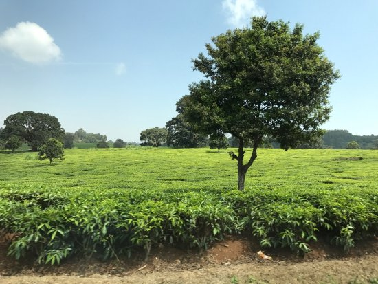 Limuru, Kenia: photo2.jpg