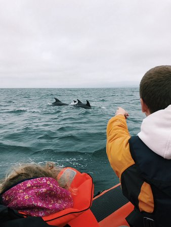 Cardigan, UK: Dolphins from the boat