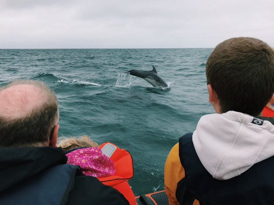 Cardigan, UK: Another dolphin