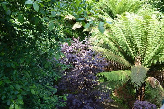 St Austell, UK: Jungle area