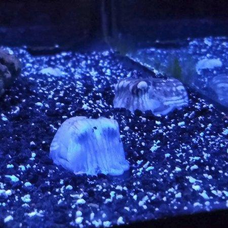 Jenkinson 39 S Aquarium Picture Of Jenkinson 39 S Aquarium