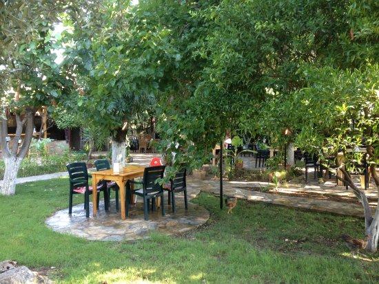 Garten  Garten - Şahin Pansiyon, Çıralı Resmi - TripAdvisor