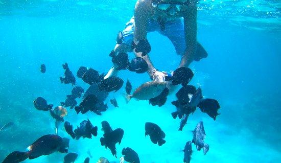 Manggis, Endonezya: Mantab buat snorkeling