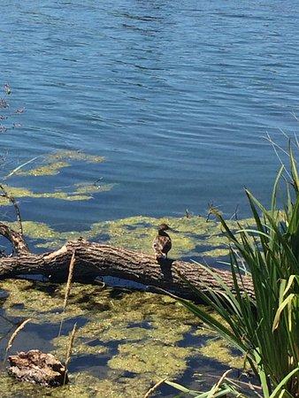 Posta Fibreno, Italie : vista sul lago
