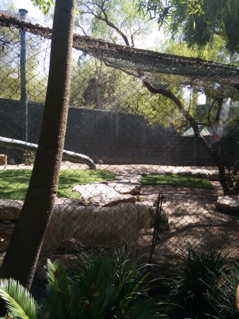 White Tiger Habitat at the Mirage: Tigers at the Mirage