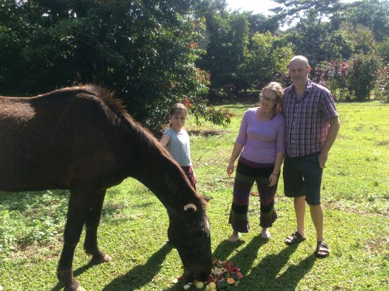 The Epiphyte Bed and Breakfast: Trish and Kev helping my daughter feed Jester.