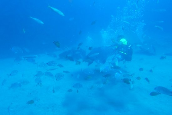 San Miguel de Abona, Spain: diver feeding the fish and rays