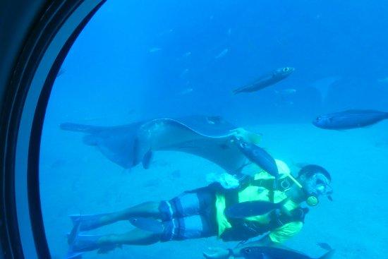 San Miguel de Abona, Spain: diver with a ray