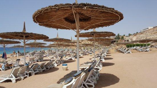 Reef Oasis Beach Resort : the beach area , الشاطىء