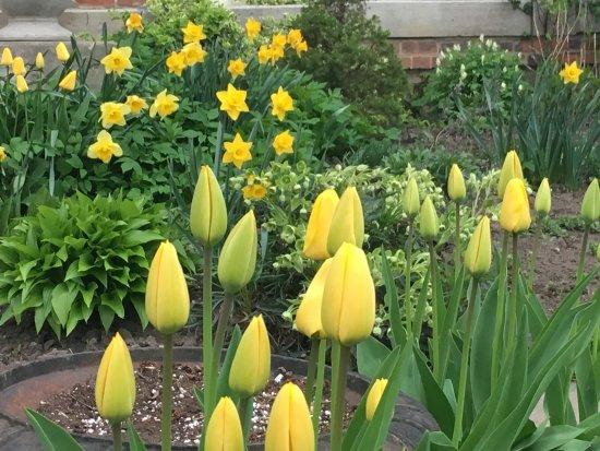 Dunnville, Canada: Spring garden