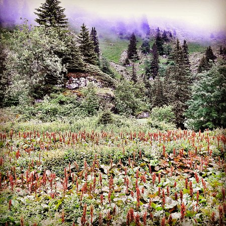 Chateau-d'Oex, Switzerland: IMG_20170715_235516_148_large.jpg