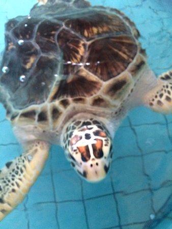 Royal Thai Navy Third Fleet Turtle Nursery (Khao Lak): Top Tips Before You Go...