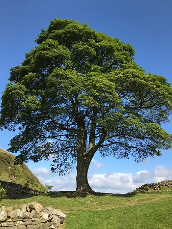 Национальный парк Нортумберленд, UK: photo2.jpg