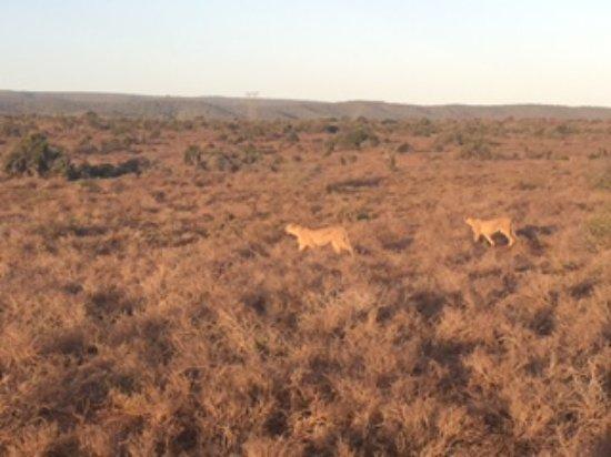 Addo Elephant National Park, Sudáfrica: Cheetahs