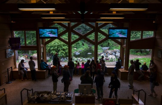 Visitors at the International Wolf Center in Ely, Minnesota, watch a few members of the pack.