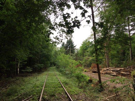 Südpfalz Draisinenbahn