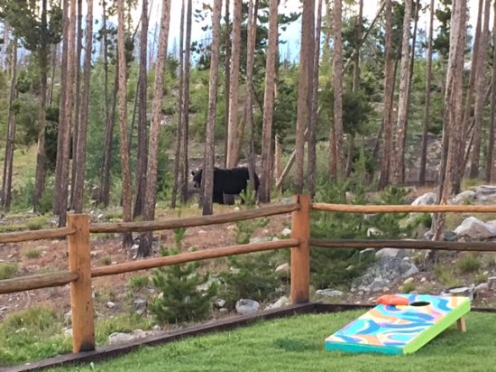 Grand Lake Lodge: bear interrupting our game time