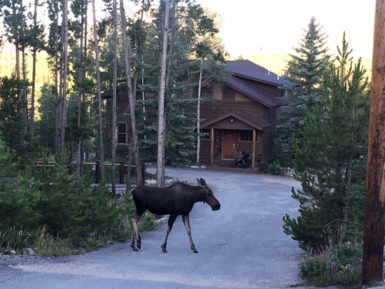 Grand Lake Lodge: here Moosey Moosey...