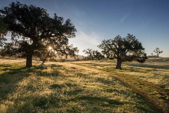Los Olivos, CA: Ranch