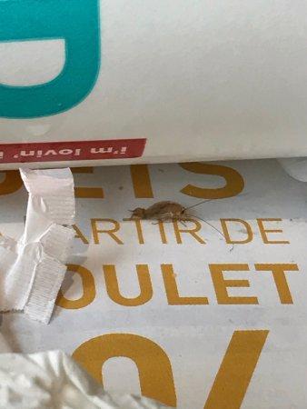 Cafard trouvé sur mon plateau au mac do de chatillon... samedi 15/07/17