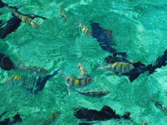 Lucaya Watersports: storage_emulated_0_Nikon_WU_Card_D071317_001_105NIKON_DSCN1889_large.jpg