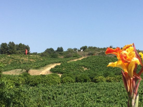 Estombar, Portugal: Zicht op wijngaard