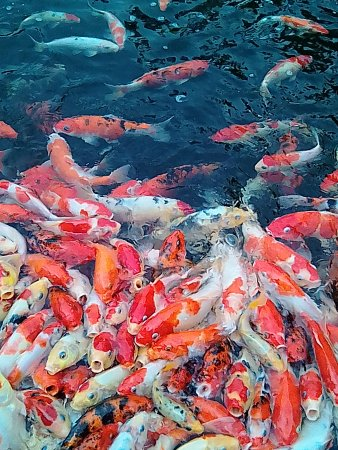 Давао, Филиппины: IMG_20170716_153223_large.jpg
