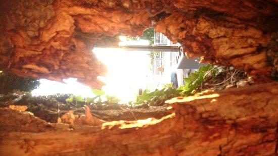 Les Acacias Bellevue: Très belle vue de la terrasse des acacias. Diner bien agréable...