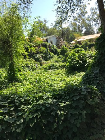 Fallbrook, Калифорния: photo5.jpg