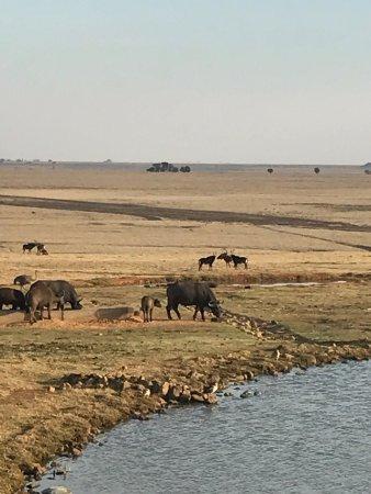 Middleburg, South Africa: photo1.jpg
