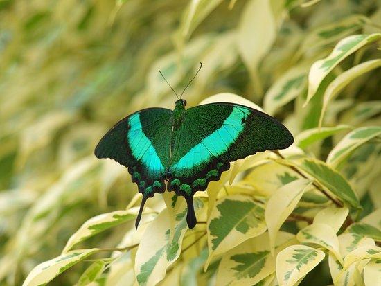 La Gueriniere, Frankrijk: papillon