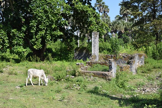 Pemba Island, Tanzania: View of the remaining some of the burial sites.