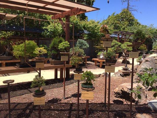 Beautiful Bonsai Picture Of Gsbf Bonsai Garden At Lake Merritt Oakland Tripadvisor