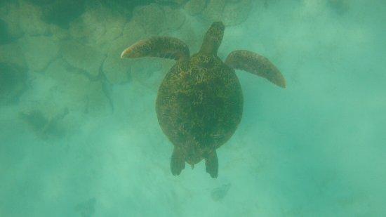 Isabela, Ecuador: Turtle