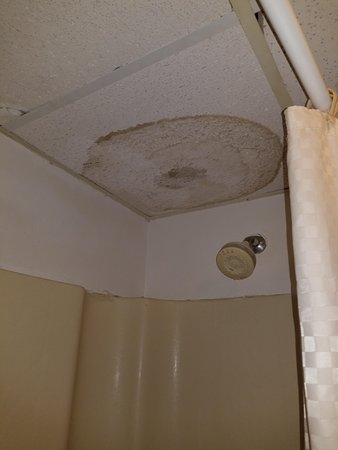 Cloud 9 Inn: mold and wet ceiling tiles in bathroom