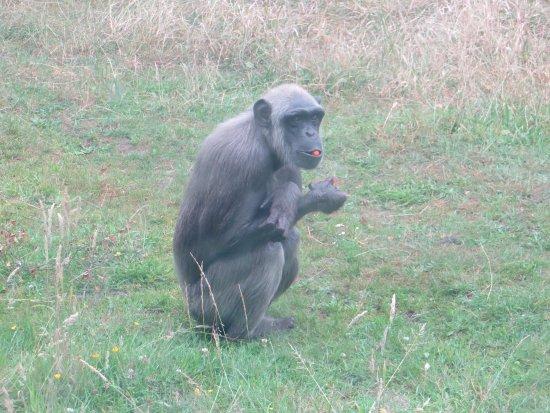 写真Monkey World枚