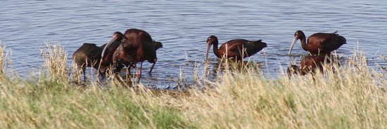 Bitter Lake National Wildlife Refuge