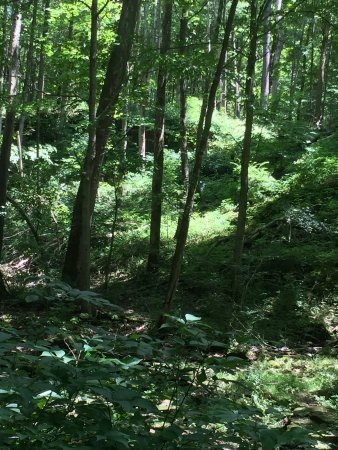 Yellow Springs, OH: View from trail.