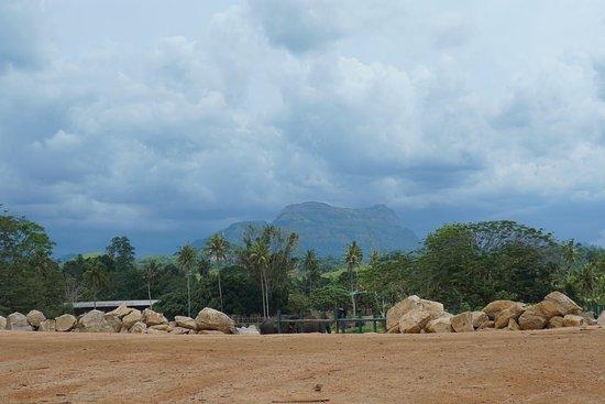 Pinnawala, Sri Lanka : Виды из питомника