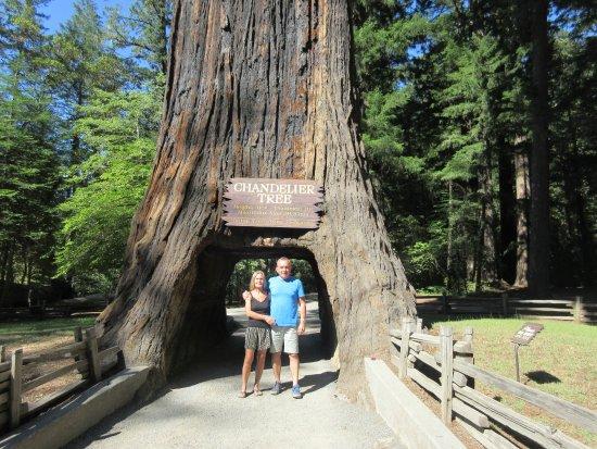 Leggett, Kalifornien: Der er hul igennem træet