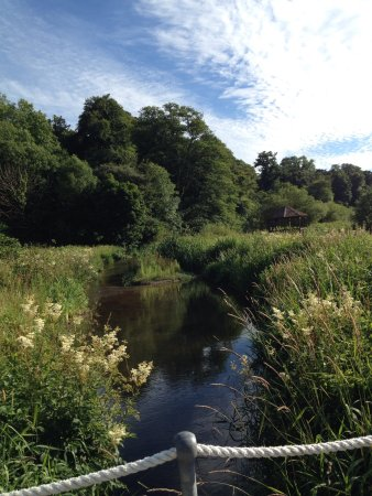 Yealmpton, UK: Beautiful summer afternoon swallows drinking out of the stream fish jumping very peaceful