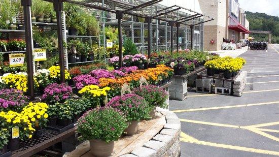 atlanta botanical garden photo de atlanta botanical