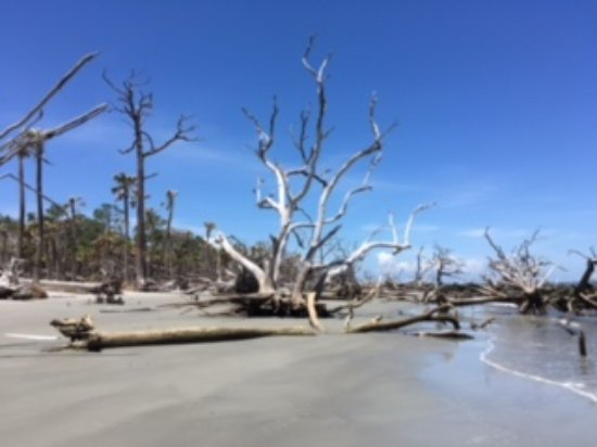 Hunting Island State Park: Driftwood beach, end of the island