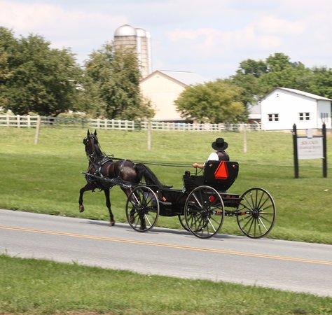 Quarryville, Pensilvania: Amish buggy