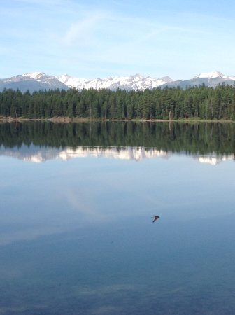 Condon, MT: View from lodge of lake, note bird flying through