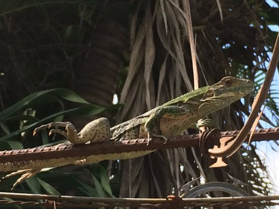 Hotel El Bramadero: A high wall and razor wire for security. A lizard is captain of the guard.