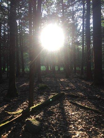 Forestburgh Photo