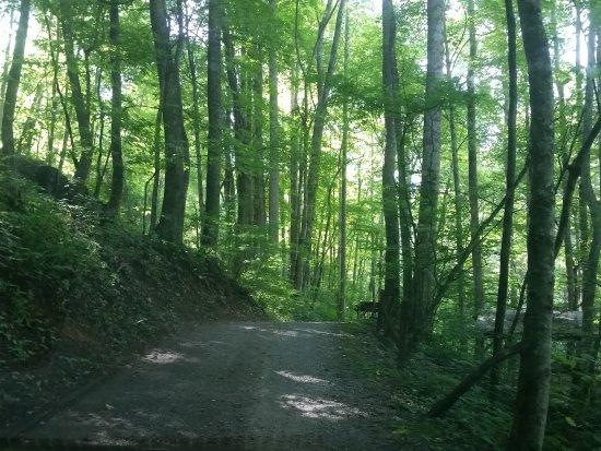 Moonshine Creek Campground照片