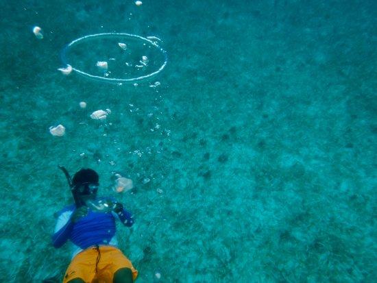 San Pedro, Belize: Snorkel Belize