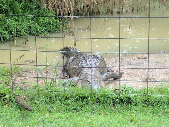Harmony Park Safari: IMG_20170703_154524_large.jpg